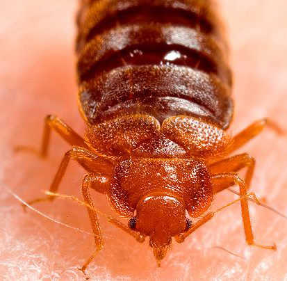Bed Bug Pest Control Exterminators in NYC, Bed Bug Exterminators Brooklyn, Bed Bug Exterminators Queens, Bed Bug Exterminators Bronx and Bed Bug Exterminators Long Island City