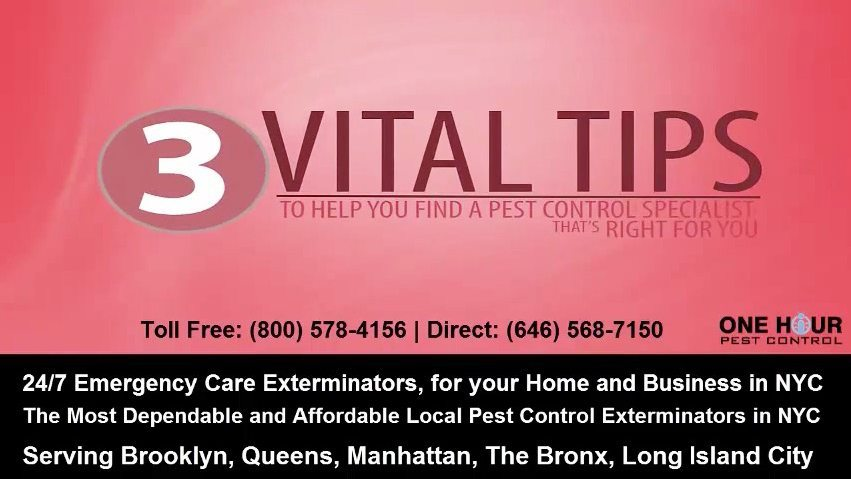 Vital Tips for Bed Bugs – 24 Hour Bed Bug Exterminators in NYC