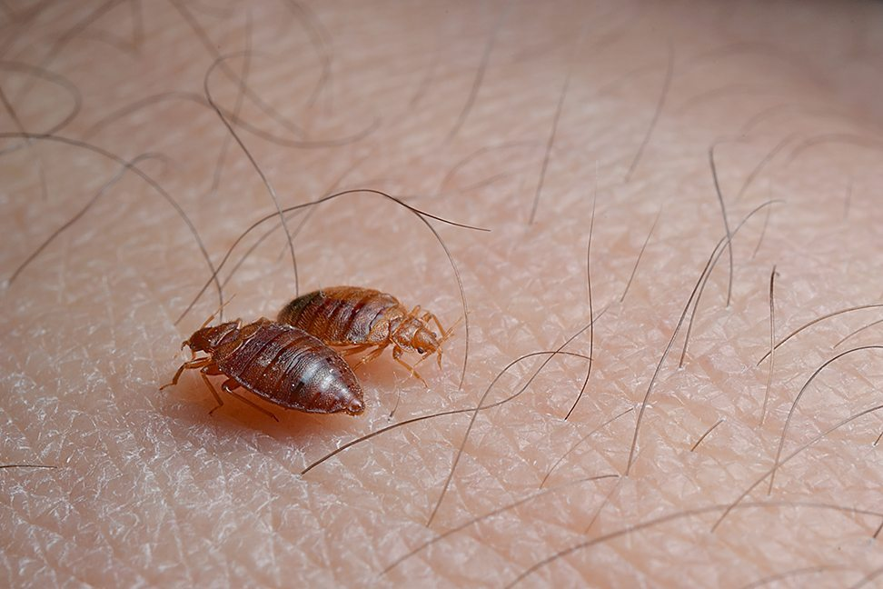 Bed Bugs In Schools Nyc