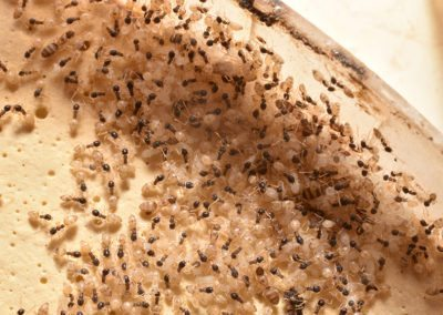 Ant Problem Pest Control in NYC, Brooklyn, Bronx, Queens and Lon