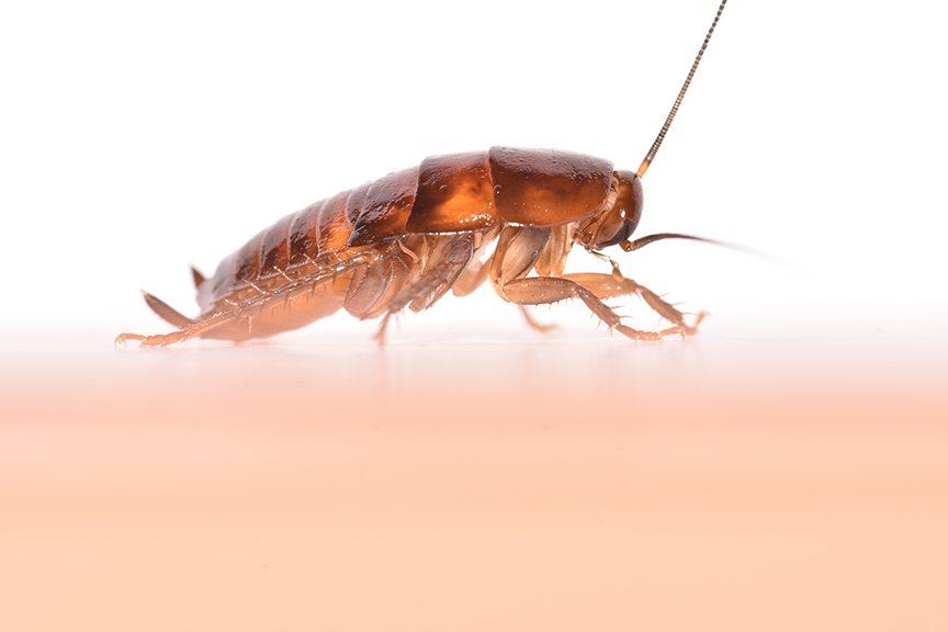 Bed Bugs Long Island Ny