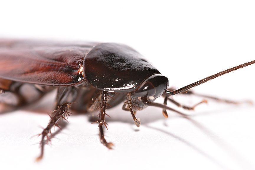 how to get rid of cockroaches in nyc apartment