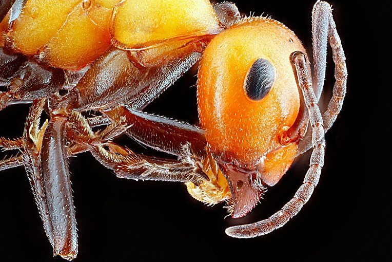 ant exterminator prices; ant exterminators near me; ant exterminator cost; ant exterminator game; ant exterminator NYC; ant exterminator Bronx; ant exterminator Queens; ant exterminator Brooklyn; ant exterminator Long Island City; ant pest control cost; ant pest control services; ant pest control natural; ant pest control companies;