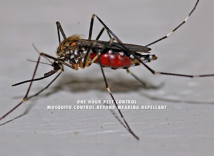 Mosquito Control Beyond Wearing Repellant - We eliminate mosquit