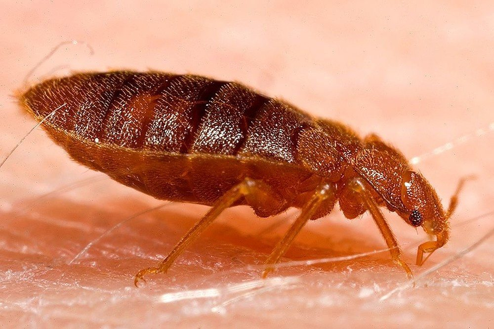Bed Bug Treatment - Prevention