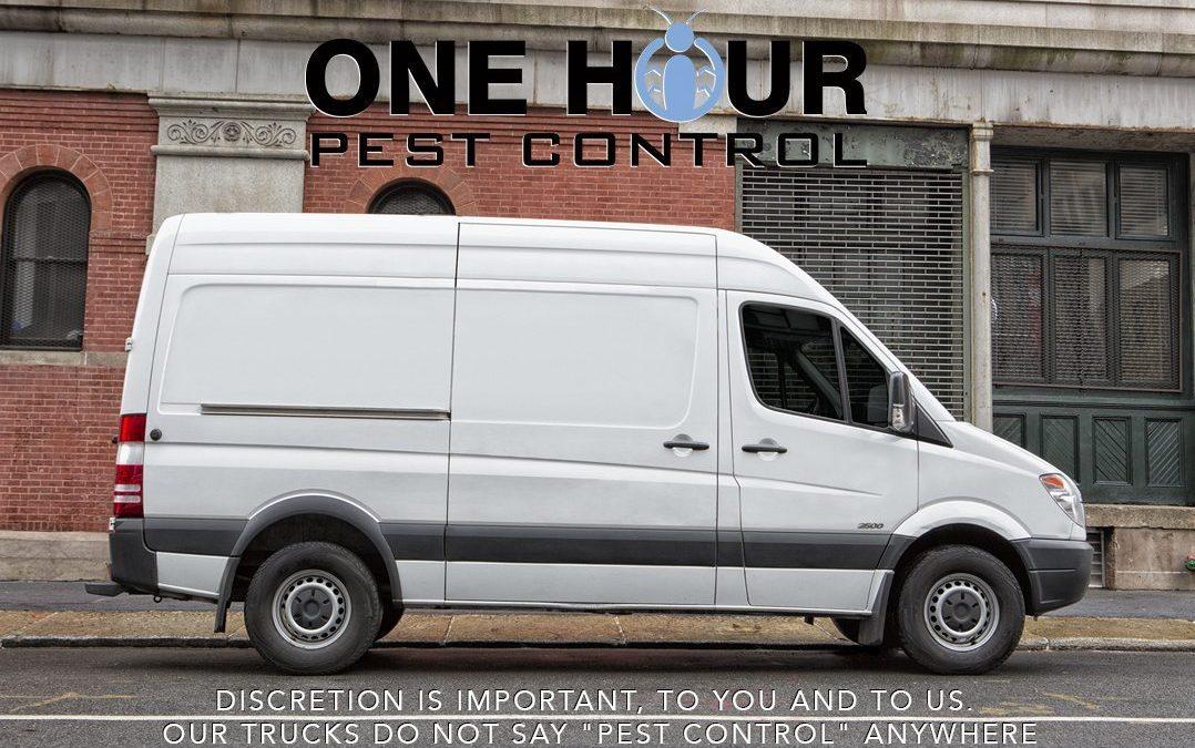 Pest Control Exterminators in NYC