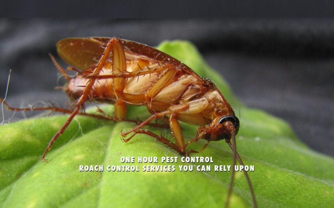 NYC Pest Control